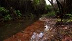 stagnant stream