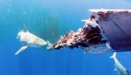 Shark eating whale carcass